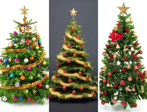 was ist f 252 r euch der perfekte weihnachtsbaum fichte