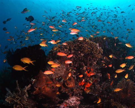 safest boat to nusa penida scuba diving bali nusa penida blue season bali