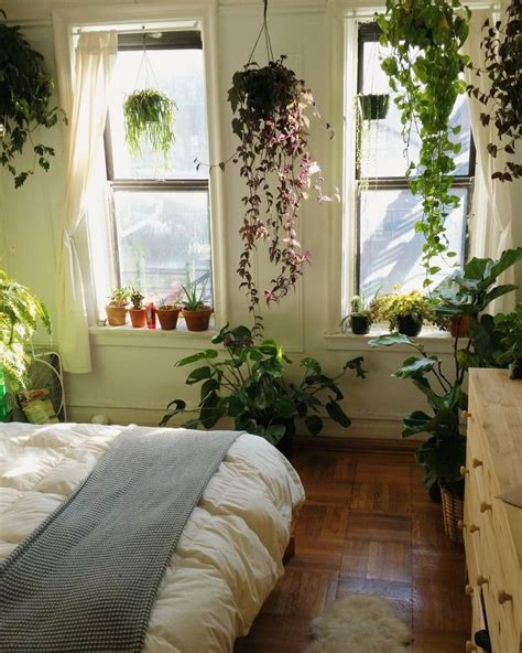 plants for the bedroom 17 best ideas about house plants on plants