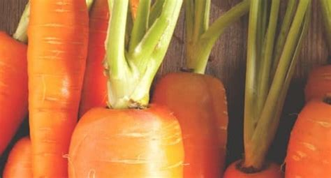 5 vegetables that are healthier cooked 5 vegetables that are healthier cooked awaken
