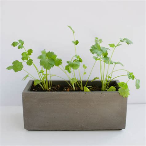Gray Outdoor Planters Charcoal Gray Concrete Planter By Nystrom Goods
