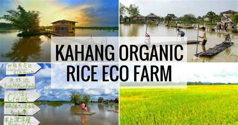7 Things To About Organic by Kahang Organic Rice Eco Farm Koref 7 Things To