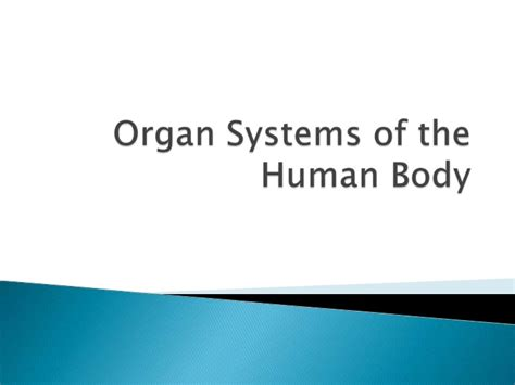 Section 35 1 Human Systems by Unit B Section 3 1 3 5 Organ Systems Of The Human