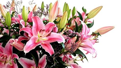 regala fiori regalare fiori regalare fiori