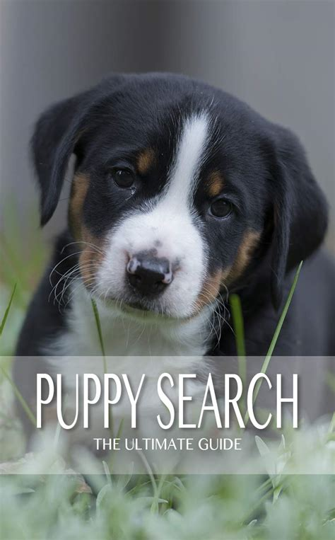 puppy finder websites puppy search a step by step guide to the puppy of your dreams