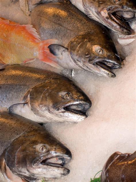Peletpakanmakanan Ikan Laut Sera Food Marine Fish Gambar Makanan Penangkapan Ikan Segar Pasar Air