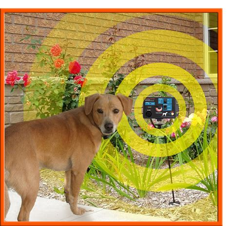 keep dogs out of flower beds keep dogs out of flower beds dog breeds picture