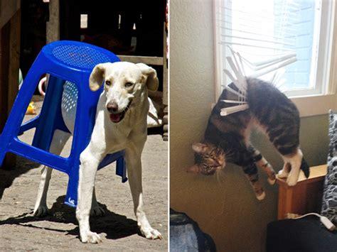 dogs   stuck  pretending   fine