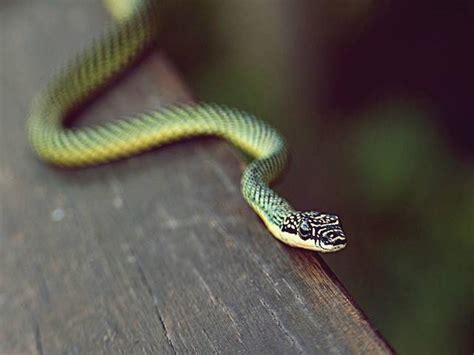 film ular cobra 6 arti mimpi ular menurut islam digigit melihat