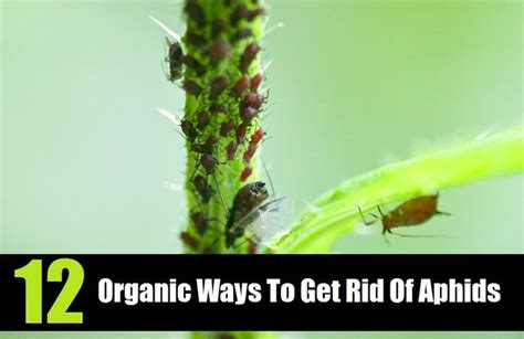 ways to get rid of pests in garden 17 best images about bugs weeds and some on