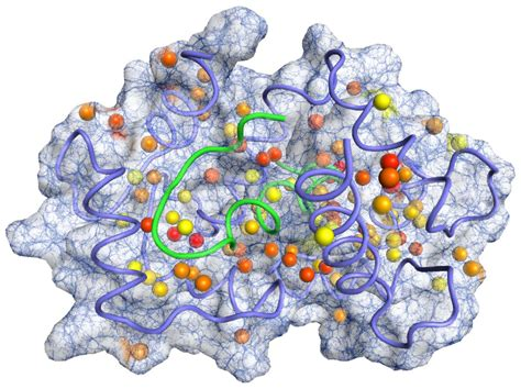 protein biology tsri scientists develop new toolkit for exploring protein