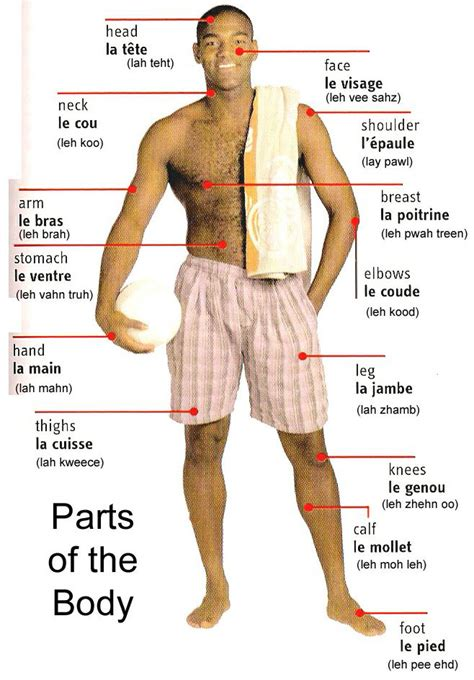 sections of the body let s learn french together parts of the body