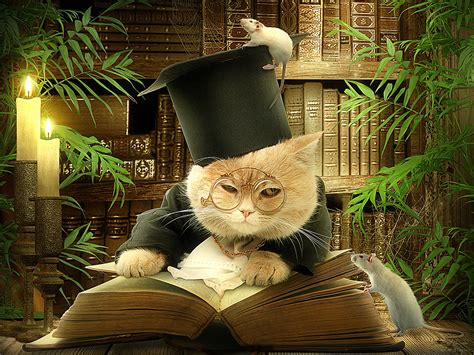 wallpaper cat book cats creative hat glasses book humor wallpaper 2400x1800