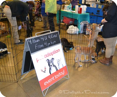 petsmart adoption national pet day at petsmart dolly the doxie
