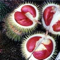 buah durian  unik  dunia