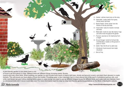 List Of Backyard by Birds Types List