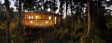disney saratoga springs resort and treehouse villas saratoga springs disney treehouse villa disney world