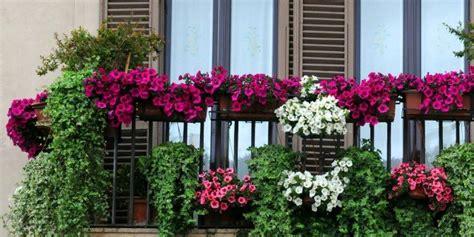 impianto irrigazione terrazzo l impianto di irrigazione automatico per i vasi in balcone