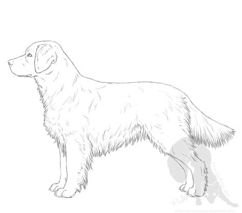 Golden Retriever Sitting Outline by How To Draw A Golden Retriever Sitting Www Pixshark Images Galleries With A Bite