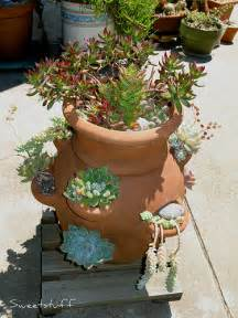 strawberry pots home depot sweetstuff s sassy succulents how to make a succulent