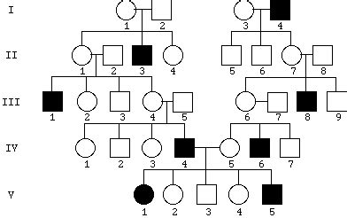 inheritance pattern pedigree quiz pin pedigree genetics problems on pinterest