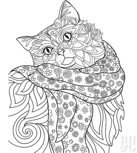 ragdoll cat coloring page pet coloring pages