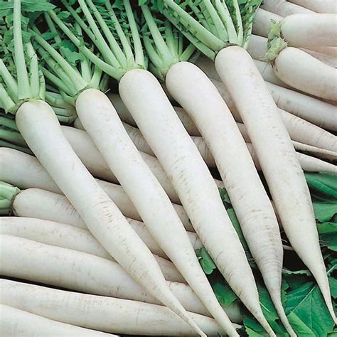 Ripped List White Rawis radish mooli mino early seeds from mr fothergill s seeds and plants