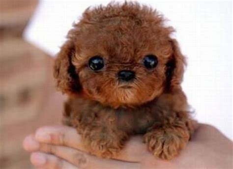 cutest in the world top 10 cutest puppies in the world