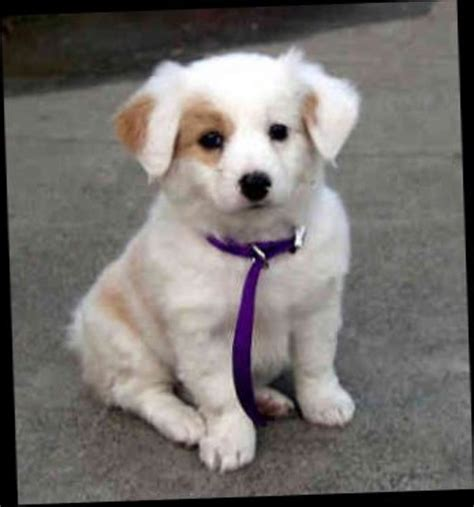 best food for small breed puppies best small breed dogs for n4wa9lxm jpg 600 215 643 puppy breeds