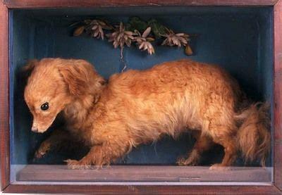 extinct dogs 10 extinct breeds extinct breeds and dogs