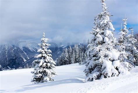 winter stock photo colourbox winter trees in alp mountains stock photo colourbox