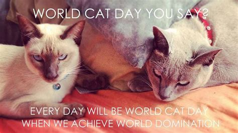 world cat cat day pictures images