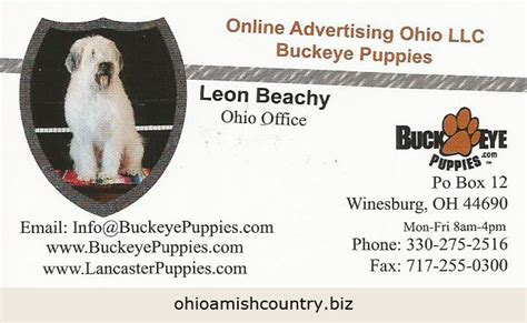 buckeye puppies buckeye puppies ohio amish country biz