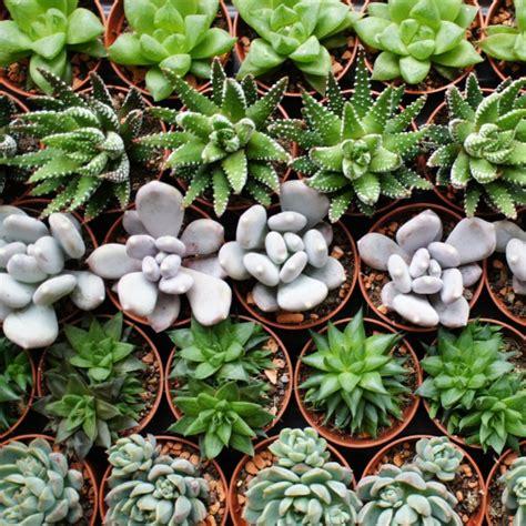 Les Plantes Succulentes by Plante Grasses