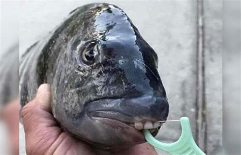 imagenes sorprendentes instagram pescador comparte incre 237 bles fotos de monstruos marinos