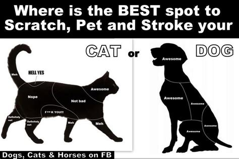 pet friendly places to stay dog cat and horse friendly the best place to stroke your pet the daily rag