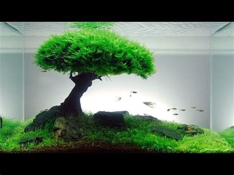 Moss Bahan Aquascape cara membuat aquascape di aquarium dengan cara yang mudah
