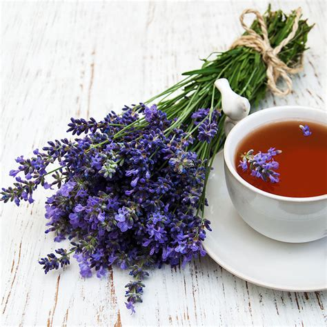 Ellagance Lavender   Bonnie Plants