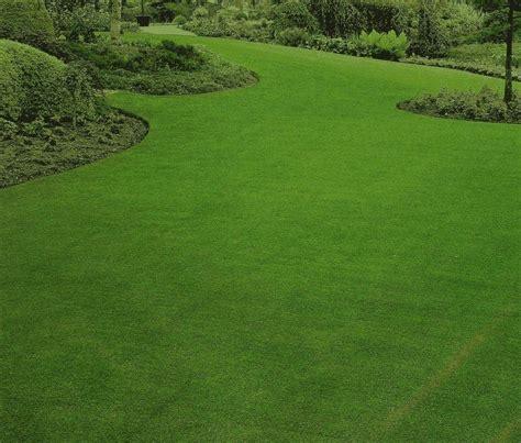 tipi di erba da giardino erba prato prato