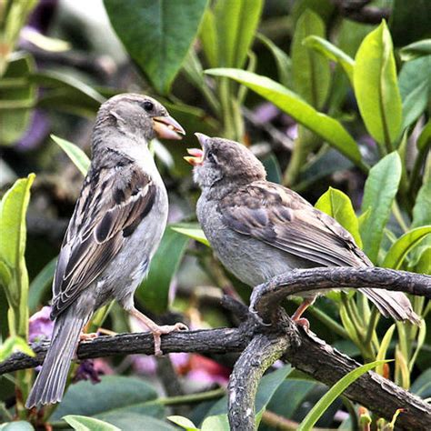 feed me feed me baby sparrow