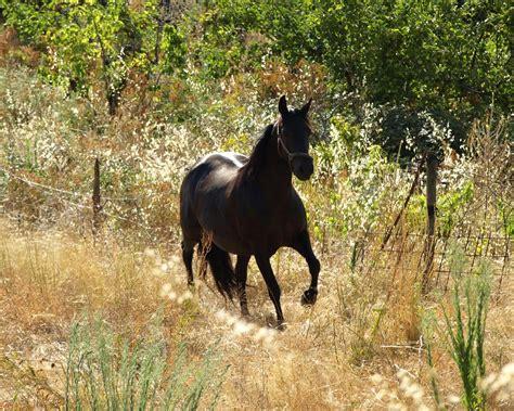 wallpaper hd black horse 12 black horse desktop wallpaper download black horse