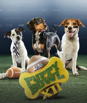 what time is the puppy bowl on today puppy bowl xii returns to animal planet 2 7