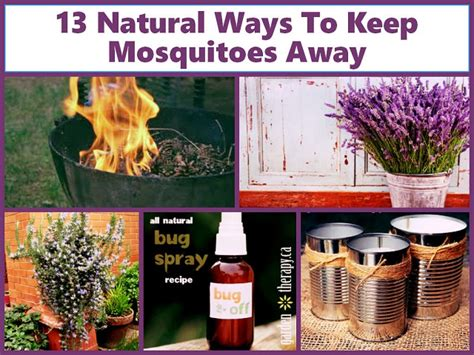 13 ways to keep mosquitoes away