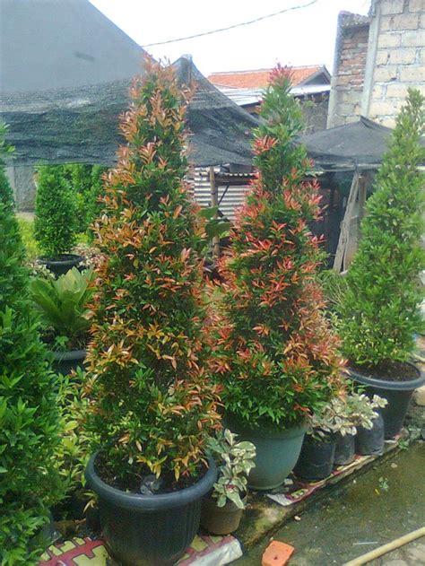 ide tentang rumah pohon  pinterest rumah pohon