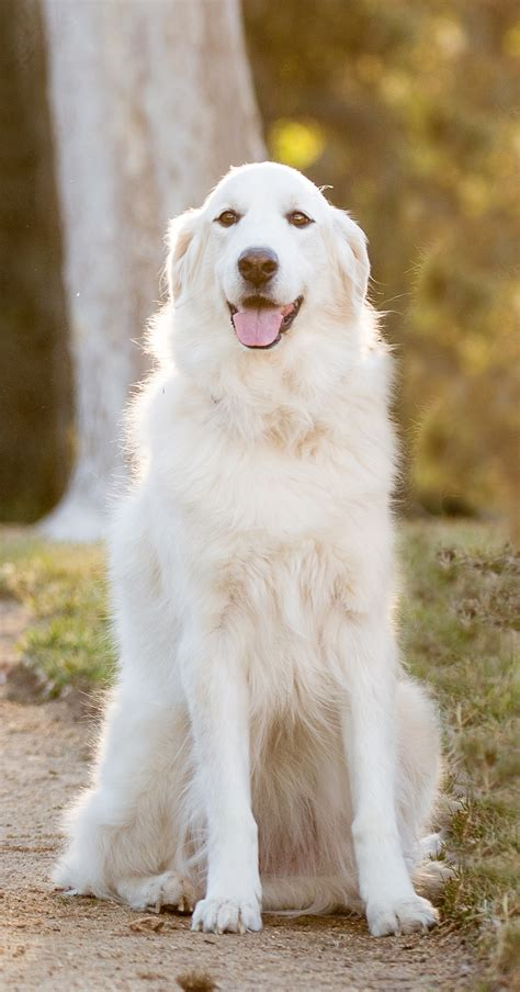 8 Doggies Id To Meet by Mischa Senior Category