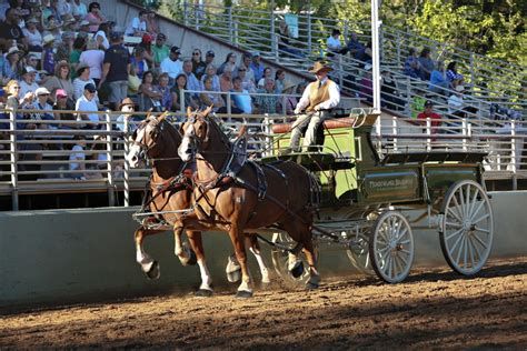Draft Horse Classic Tickets On Sale Nevada County Classic Grass Valley Ca