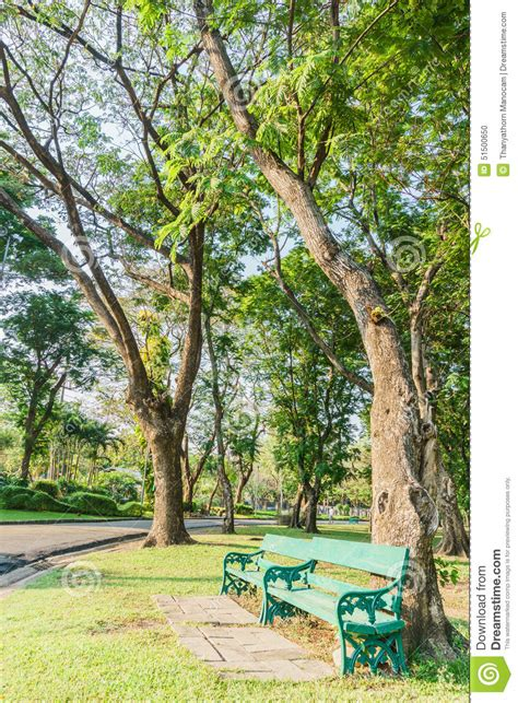bench under tree bench under the tree in the gardens stock photo image