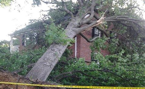 insurance tree falls neighbors house what to do if a tree falls who to call