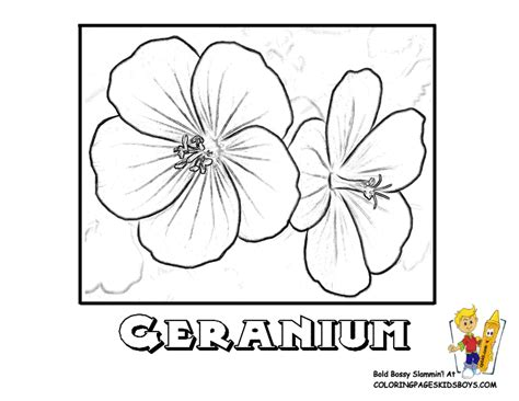 coloring page of dogwood flowers coloring page of dogwood flowers coloring page