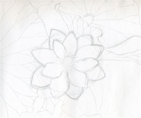 Sketches Flowers by Lotus Flower Drawings Made Easy